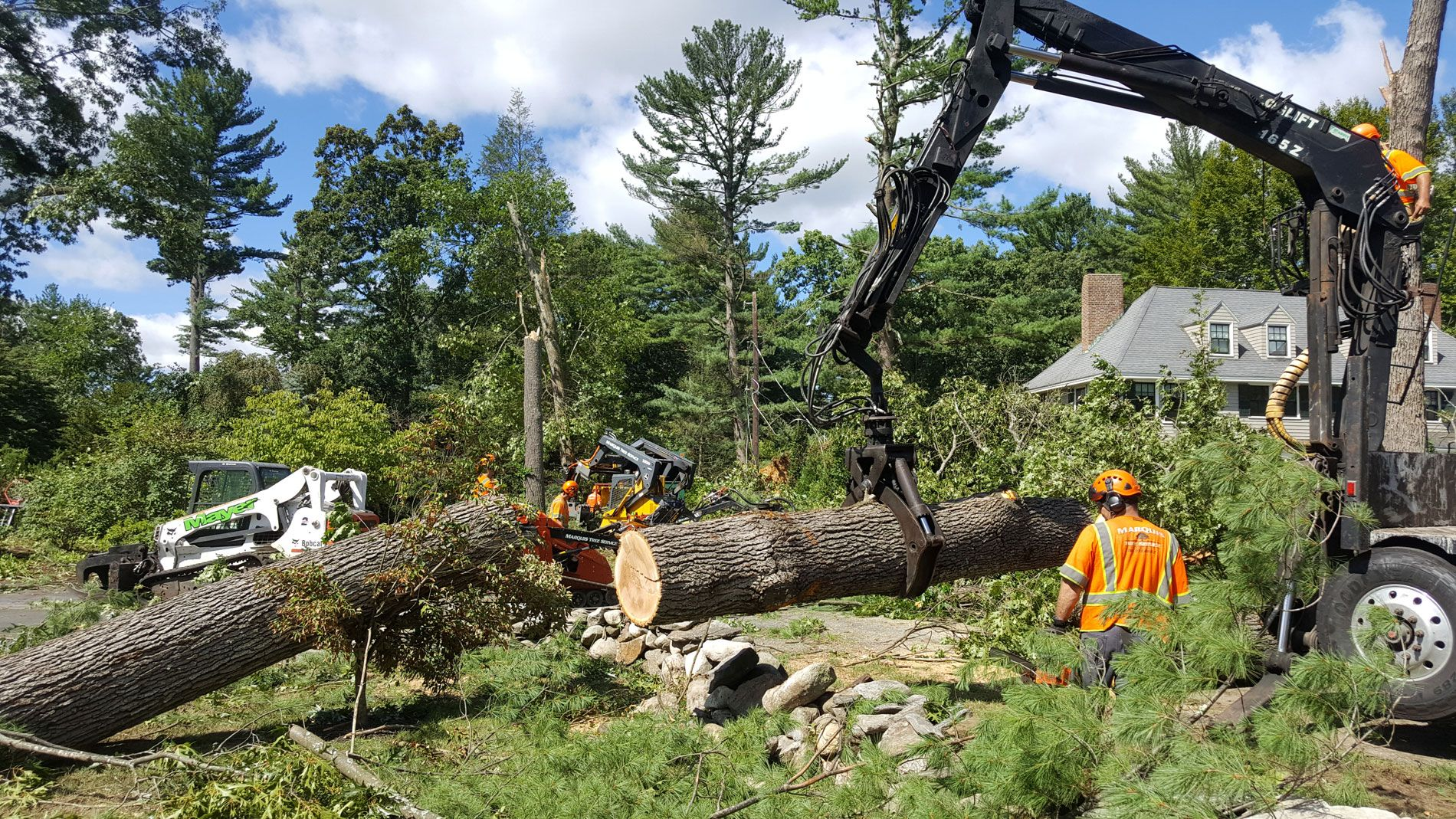 Tree Removal Services In Melbourne Offer Quality Work At Less Price