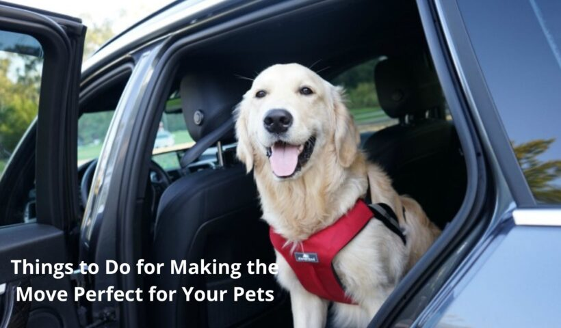 Things to Do for Making theMove Perfect forYour Pets